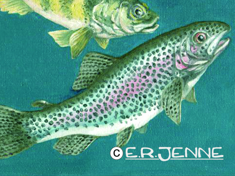 An illustration in water soluble oil paints depicts some invasive fish species for an article in 'Montana Outdoors' magazine.